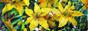 ЖИВОПИСЬ МАСЛОМ. Пейзаж. Натюрморт. Картины на заказ НЕДОРОГО. Художник Жукова Юлия.